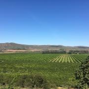 Gamtoos - Patensie Valley